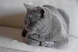 lelijiniai kačiukai su dokumentais