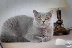 katės pirkimas