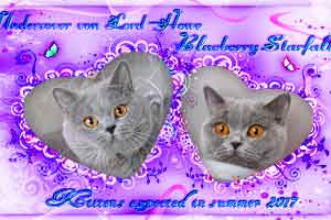Cats Blueberry Weddings Berry - 2