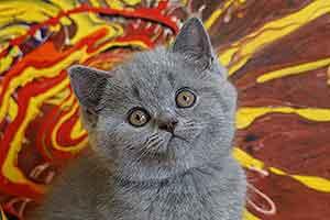 Cats Cassi Bri Molodaja Kosecka - 3