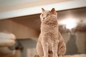 Cats Cassi Flufy Female Posing - 2