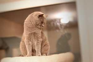 Cats Cassi Nuostabi Katyte Pozuoja - 1