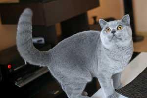 lelijinės spalvos kačiukai