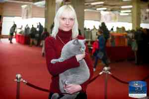 Cats Undercover British Shorthair Show - 41