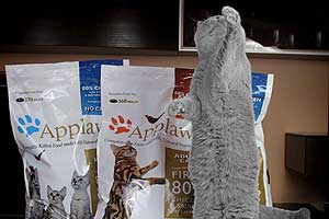 Cats Undercover British Shorthair Applaws - 32