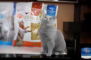 Cats Undercover British Shorthair Applaws - 31