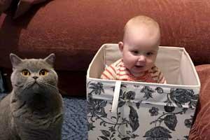 Cattery Children Playing British Shorthair Kittens - 2
