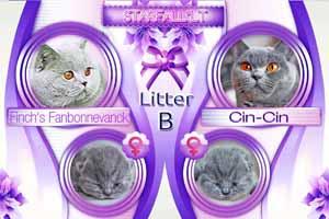 Kittens Flyer - 1