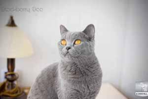 Kittens Blacky Balcon - 180