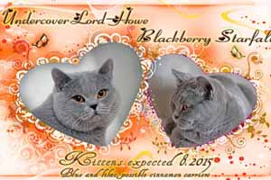 Kittens Weddings - 1