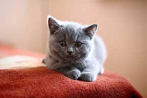 Kittens - 52