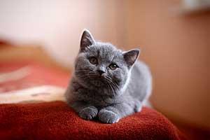 Kittens - 51