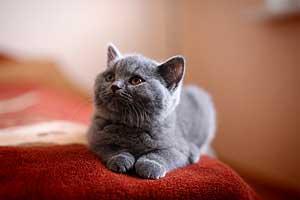 Kittens - 50