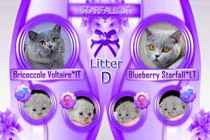 Kittens Flyer - 2