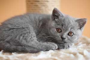 kaip maitinti katę