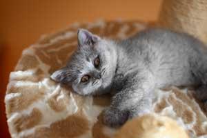 Kittens - 4
