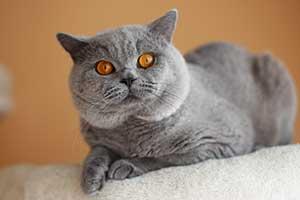 kačių charakteris