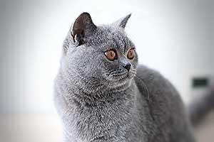 Kittens Deep Copper Orange Eyes - 5