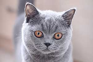 Kittens Simpatiska Katyte Melynos Spalvos - 2