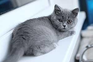 kačių elgesis