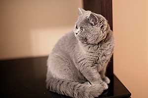 Kittens Nuostabi Katyte Dideles Akys - 24