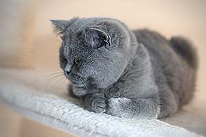 Kittens Liudna Melyna Mergaite - 22