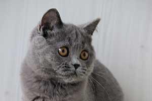 informacija kačių savininkams