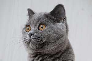 kačių informacija