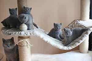 Kittens Didele Vada - 6
