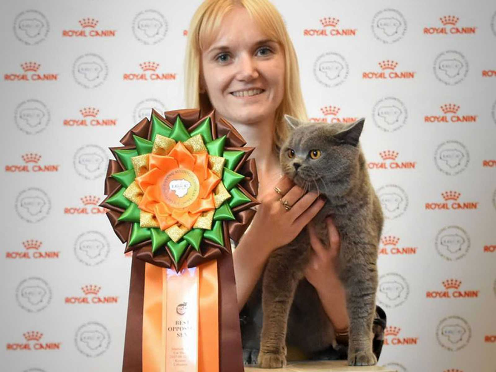 Kalame Blue Malak at International Cats Show in Kaunas