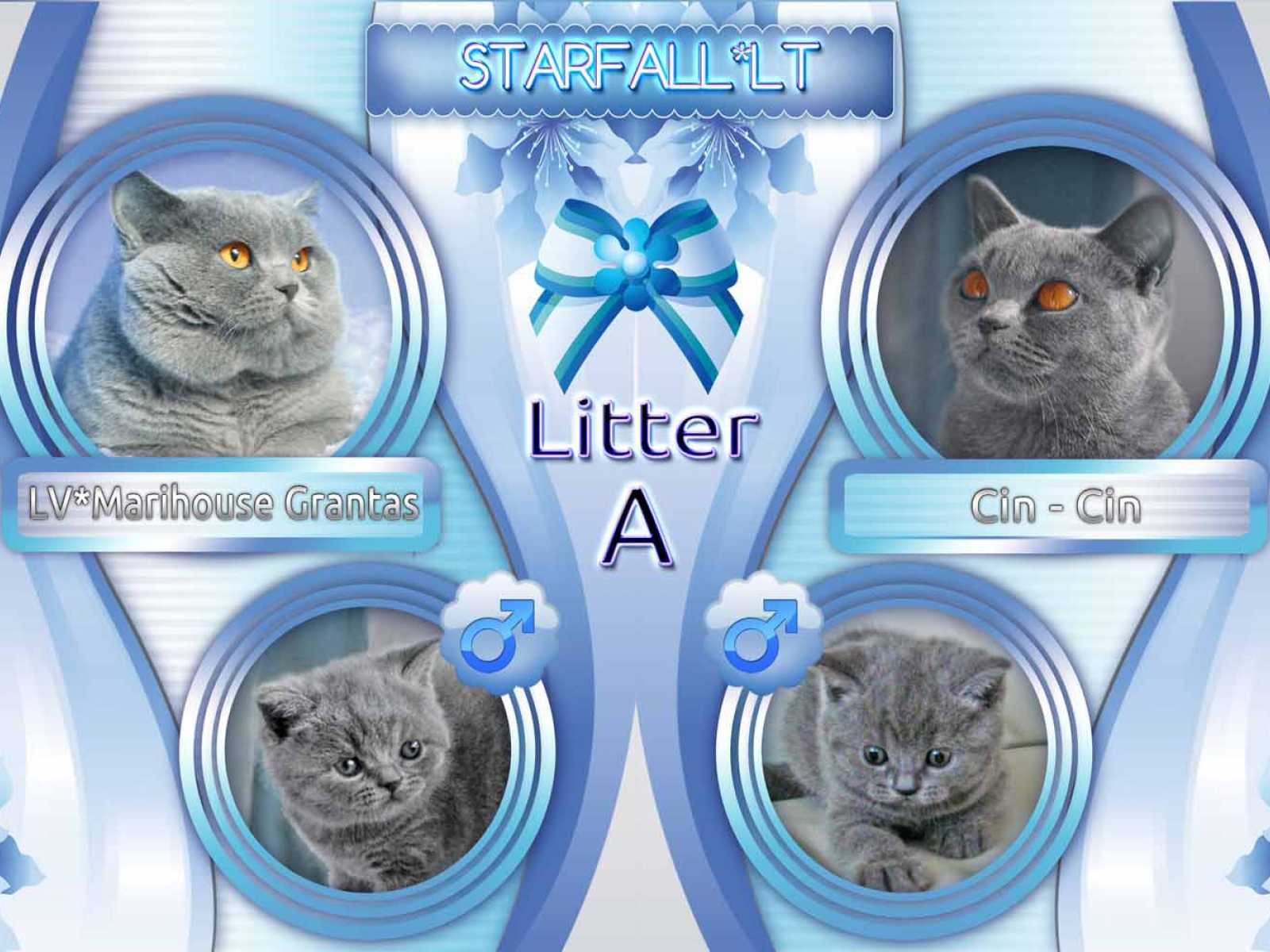 Litter A has been born